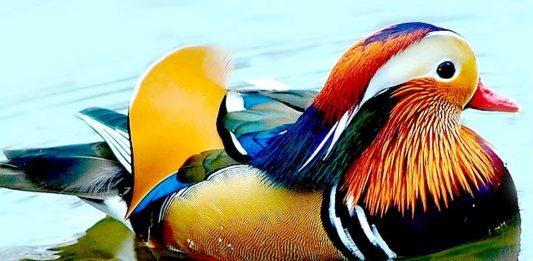 10 самих казкових і чарівних птахів у світі - фото