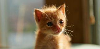 Що не так з людьми, які не люблять котів. Про позитивний вплив магічних тварин