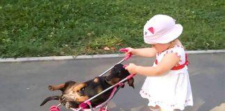 Приїхала погостювати внучка. Кіт - навтіки, а ось пес не встиг - відео