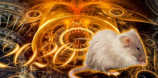 Гороскоп на 2020 рік - сюрпризи від Білого Щура для кожного знаку Зодіаку