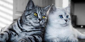 Чим нахабніше — тим краще - з гумором про те, чому котів корисно любити