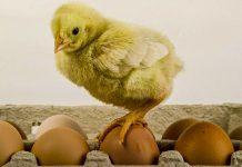 Лікувальна сила звичайного яйця — рецепти народної медицини
