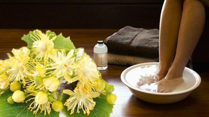 Липовий цвіт проти відкладення солей — сила народної медицини