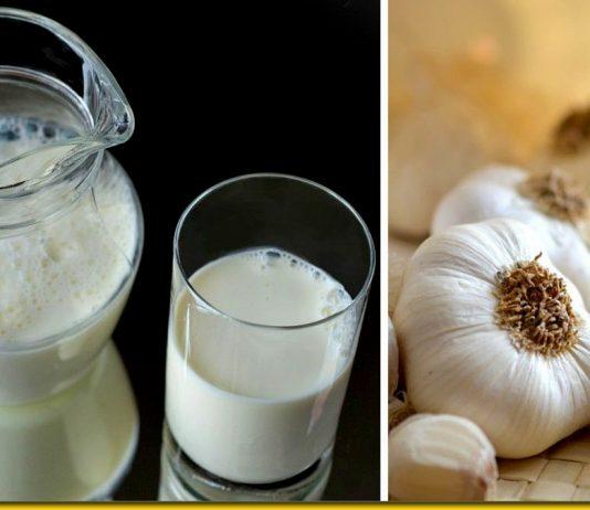 Молоко і часник — золотий народний рецепт від 100 болячок