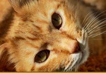 Кішка — діагност Карми та знак добробуту - є така думка