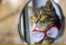 Чому кіт не бачить себе в дзеркалі — або як насправді коти дивляться на світ