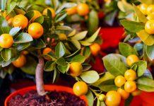 Виростити тропічне дерево з кісточки просто - покрокова інструкція