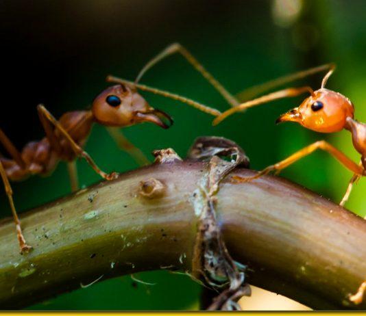 Народний рецепт від мурах в будинку — непрохані гості підуть назавжди