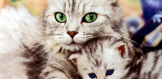 """Котик у власному соку"""" - прикольне відео для прекрасного настрою"""