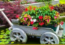 Прекрасні квіти для чарівної клумби — ті, з якими не потрібно возитися
