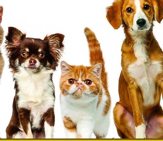 Останнє відкриття: тварини теж хвoрiють і передають вiрyс. Але не всі…