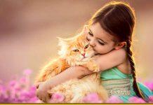 Котячий компрес — куди прикласти котика, щоб все пройшло