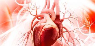 Народна аптека для поліпшення кровообігу — натуральні рецепти