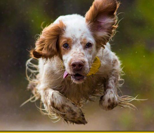 Собачий Гороскоп — який ви пес за знаком Зодіаку